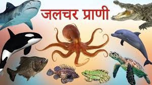 Water Animals Name In Hindi And English