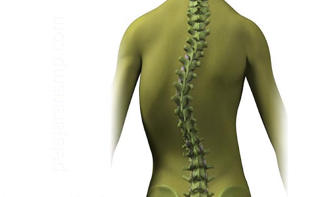 Ulangan Materi Gerak Pada Manusia, Masalah Otot, Jenis Rangka Tulang, Jenis Sendi, dan Masalah Tulang Beserta Kunci Jawabannya