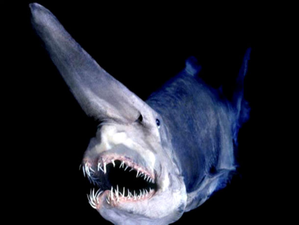 Espeluznante monstruos marinos profundidades océano