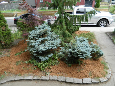 Toronto Leslieville front garden summer cleanup after by Paul Jung Gardening Services