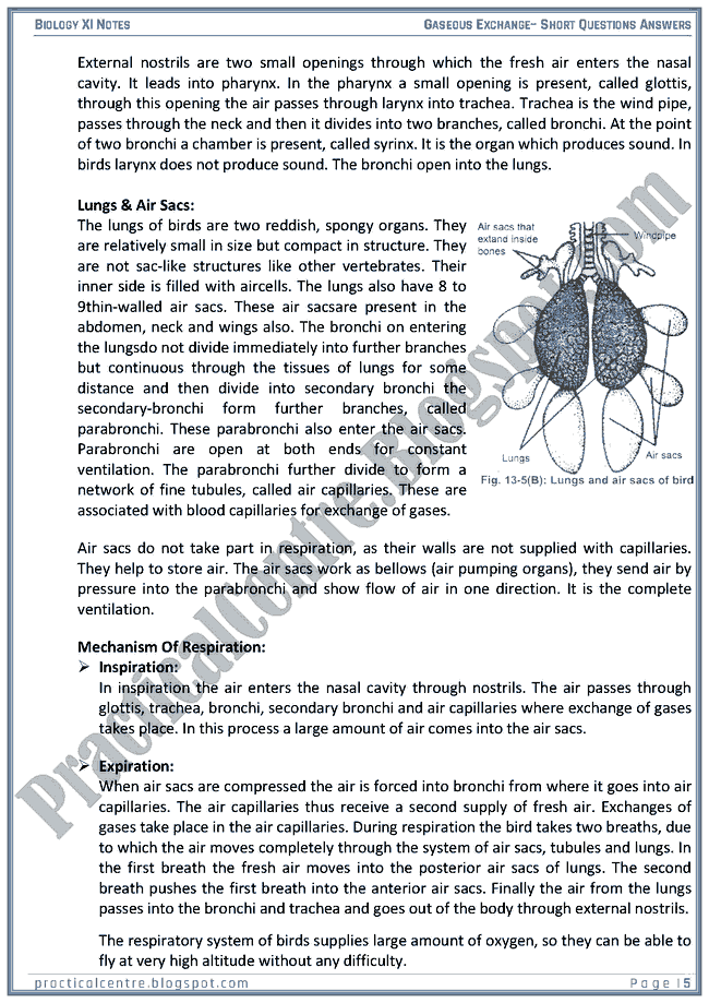 gaseous-exchange-short-questions-answers-biology-xi