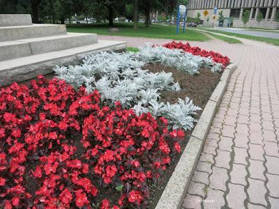 Toronto flower bed