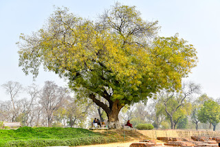 Viaje_India_Fotografia