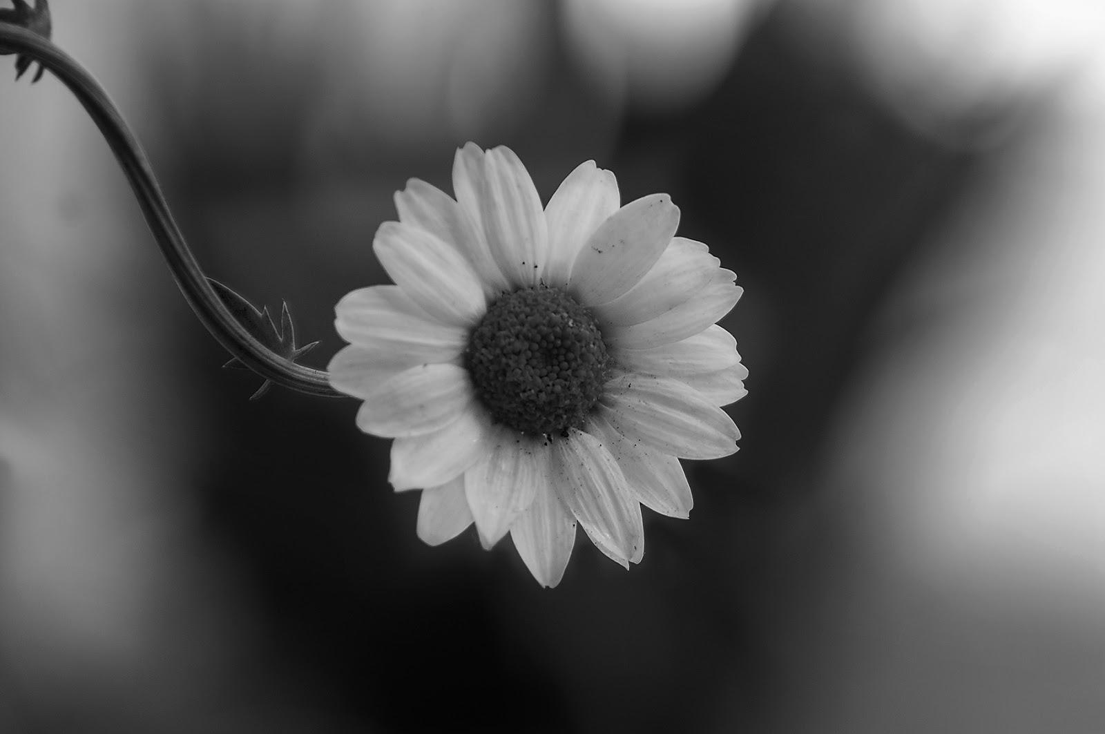 Blanco y negro - 1 7