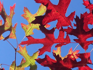 Fall leaves at Red Oak Recovery®