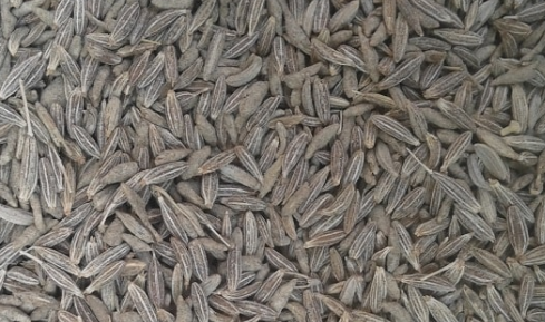 Cumin Seeds  Jeera Cures Itchiness and Body Heat