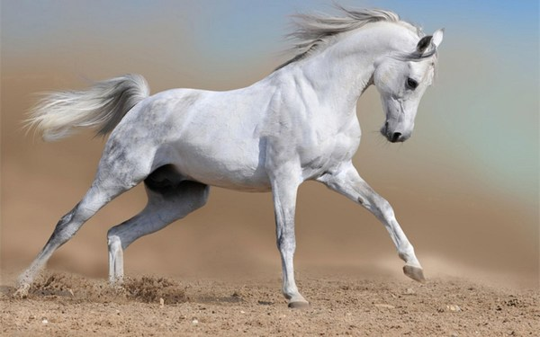 White Horse Images HD Widescreen