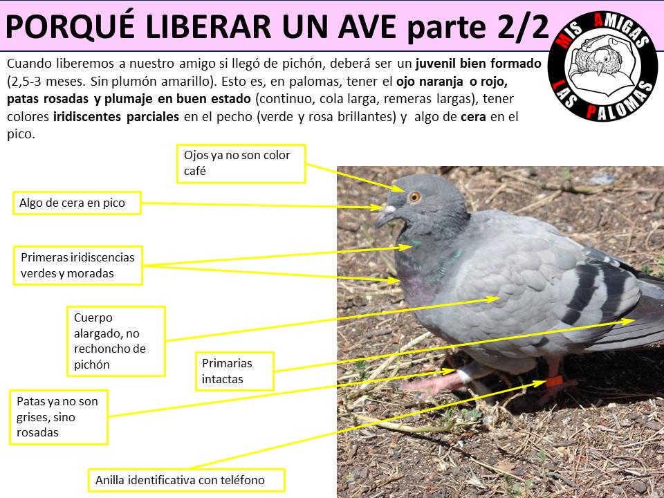 Mis amigas las palomas: La liberación, el gran momento