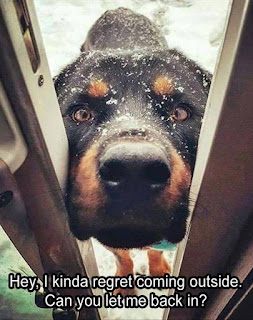 Hey I kinda regret coming outside. Can you let me back in?