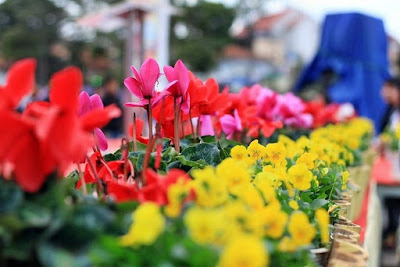 Flower festival to bring fragrant blossoms to Da Lat in 2017
