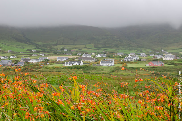 Peninsula de Dingle flores Irlanda Condado de Kerry