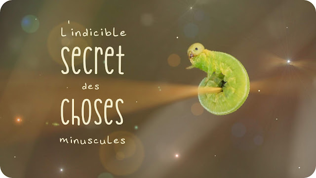 https://fr.ulule.com/les-choses-minuscules/