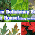 Fixing the Calcium Deficiency in the Garden to the Plants from your Kitchen!