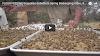 Πάτεντα: Τάισμα όλων των μελισσιών με γύρη νωρίς την άνοιξη (video)