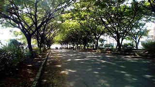 Jual Pohon Pelindung,Pohon Trembesi