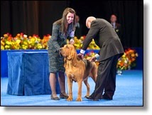 Picture of dog getting award at dog show