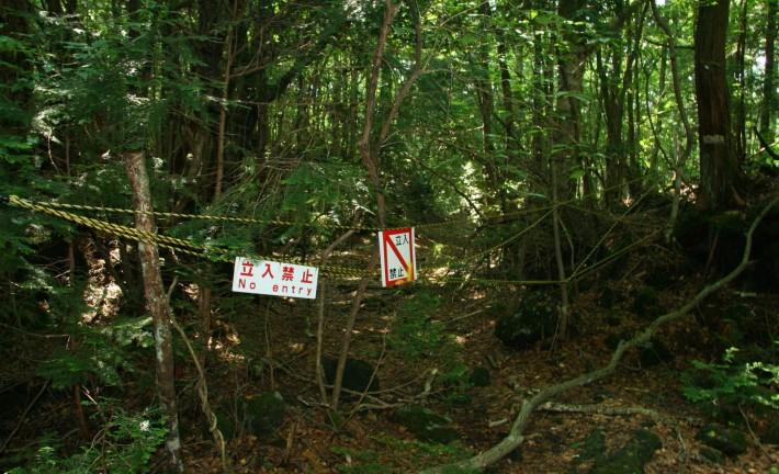 Jalan Pintas ke dalam hutan