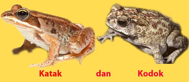 katak dan kodok