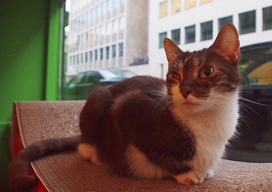 cat cafe saint-gilles