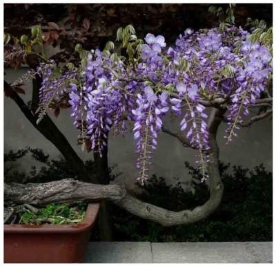Descubre la belleza de las plantas ornamentales para for Que son plantas ornamentales