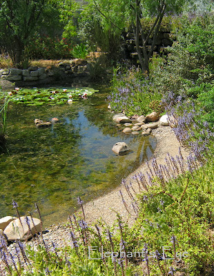 Ungardening Pond with beach for birds to bath