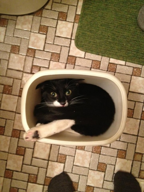 cats are liquids 3