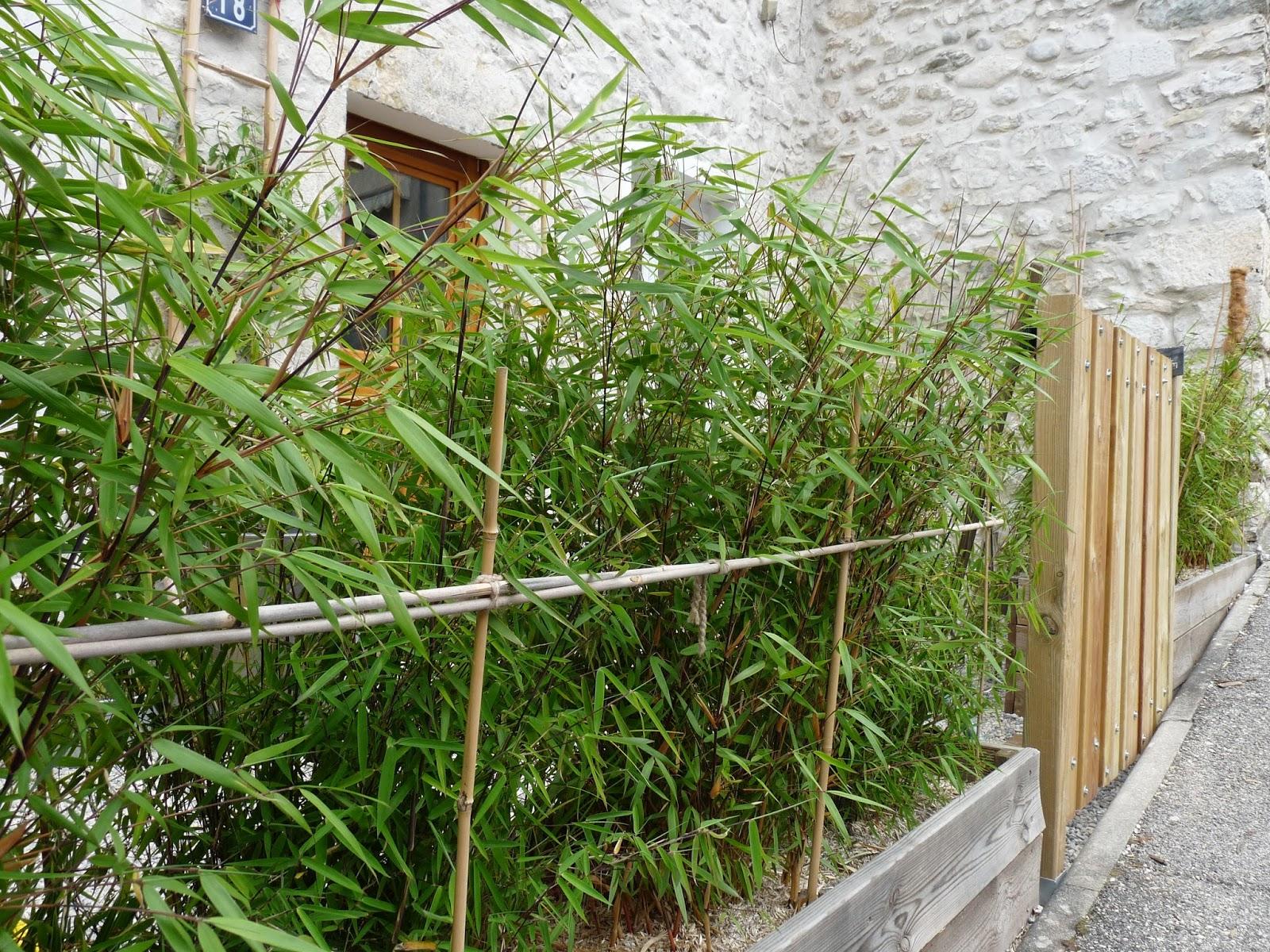 jardiniere en bois pour bambou gallery