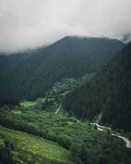 Transformer Genève en forêt vierge?