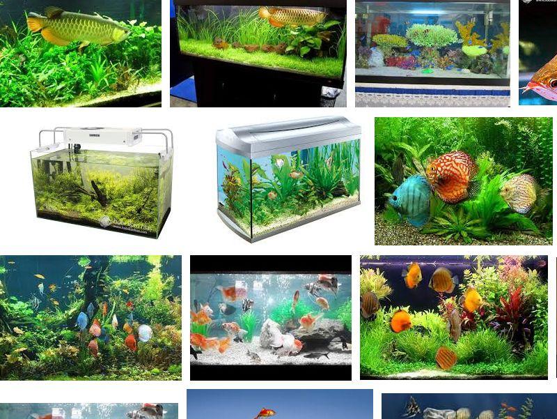 Cara Merawat Ikan Hias dalam Akuarium