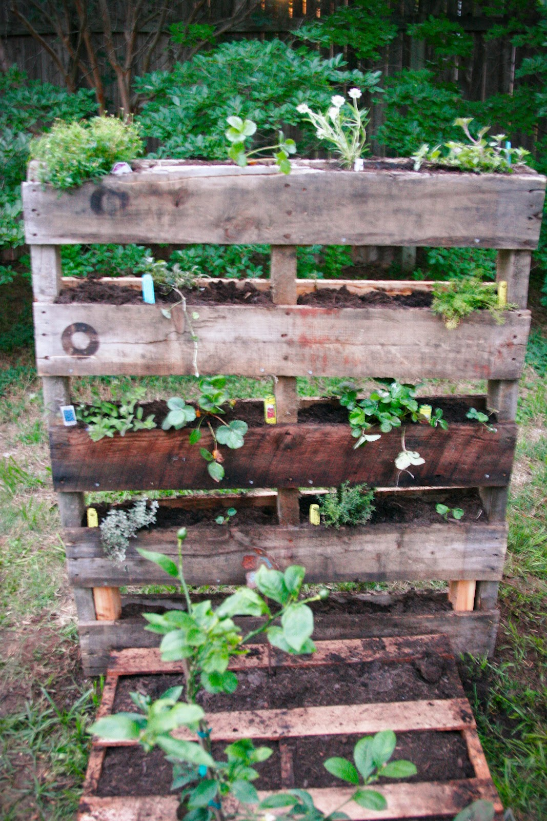 Metalsgirl pallet garden for Landscape gardeners