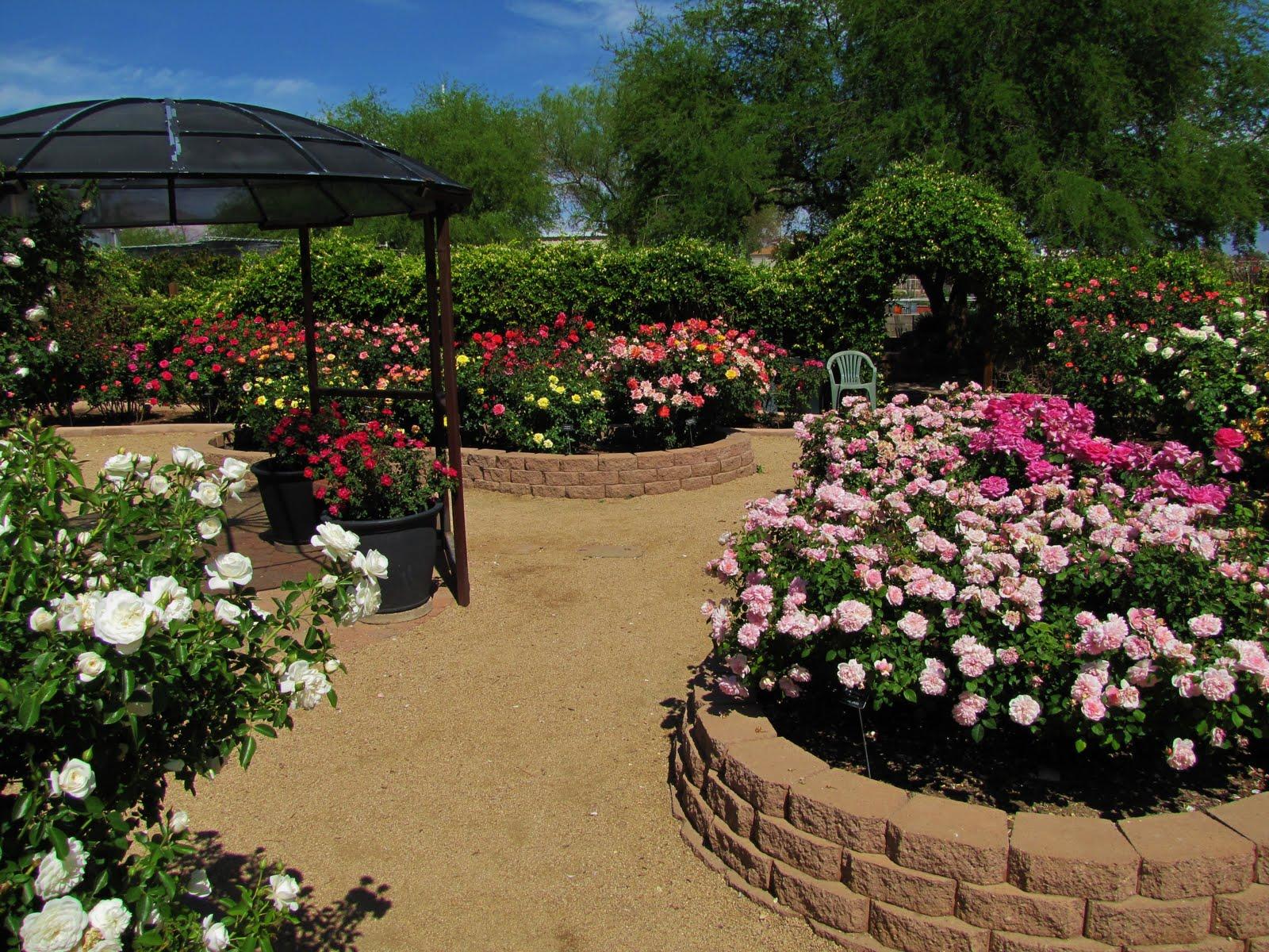 Attractive A Rose Garden In Tucson