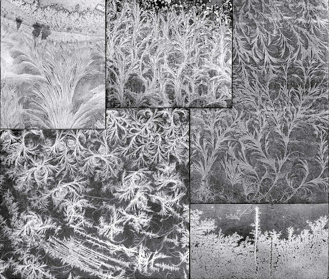 Photos of window-frost from an old book
