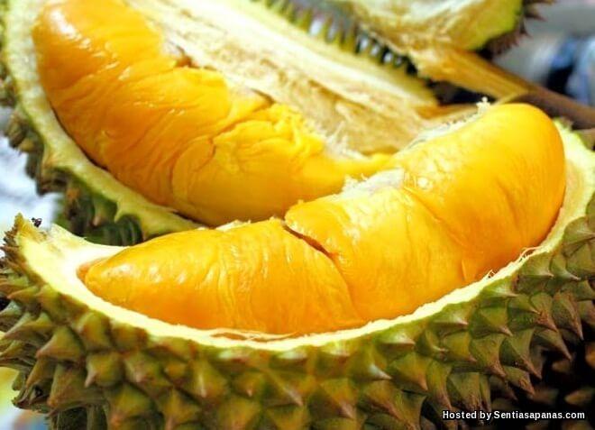 Mengenali Durian Musang King