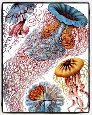 By Original: Ernst Haeckel. From: [1]. [Public domain], via Wikimedia Commons