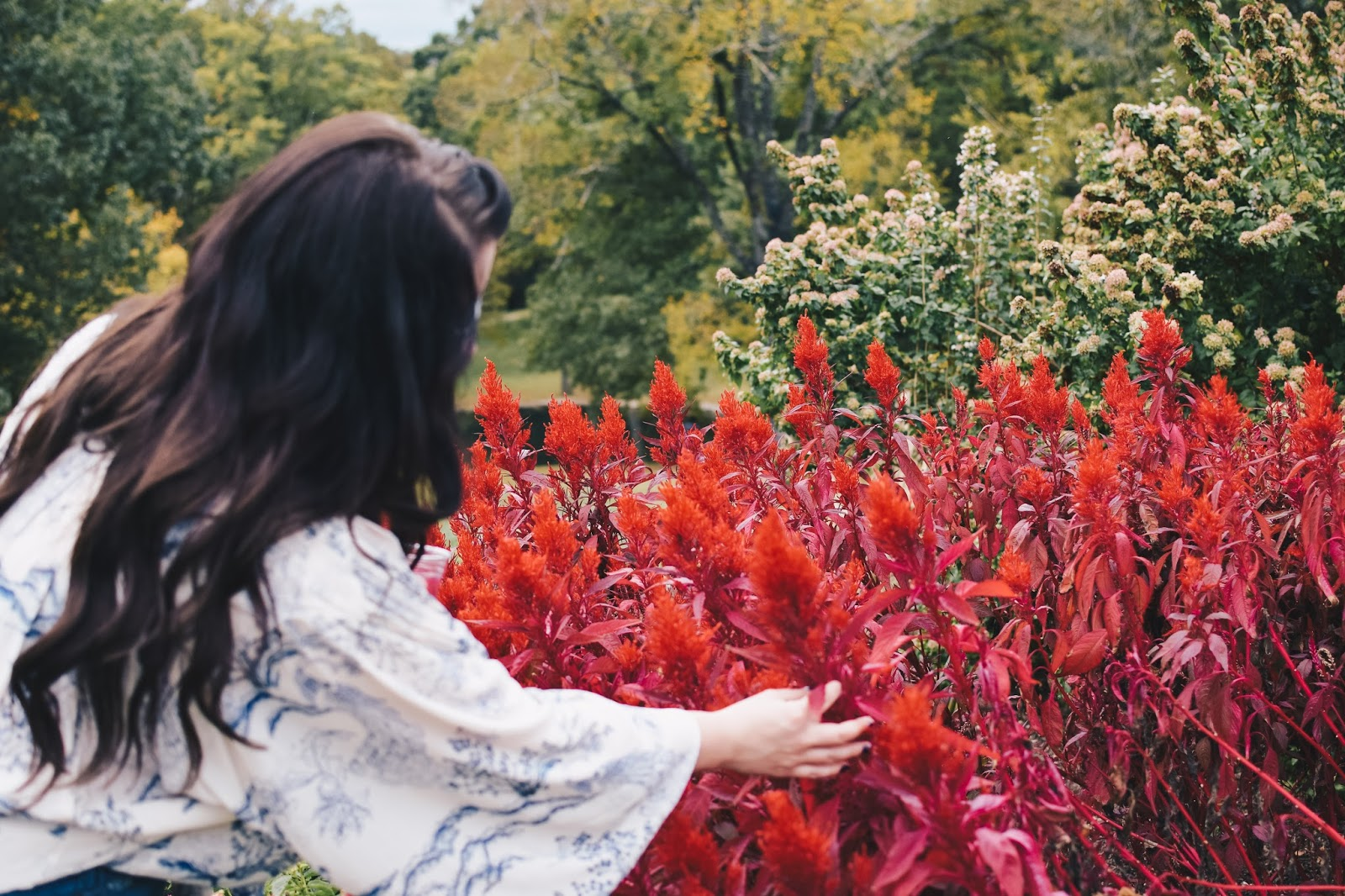 dragon's breath at cheekwood estate and gardens
