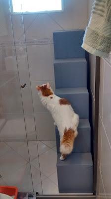 gatos acesso a locais altos