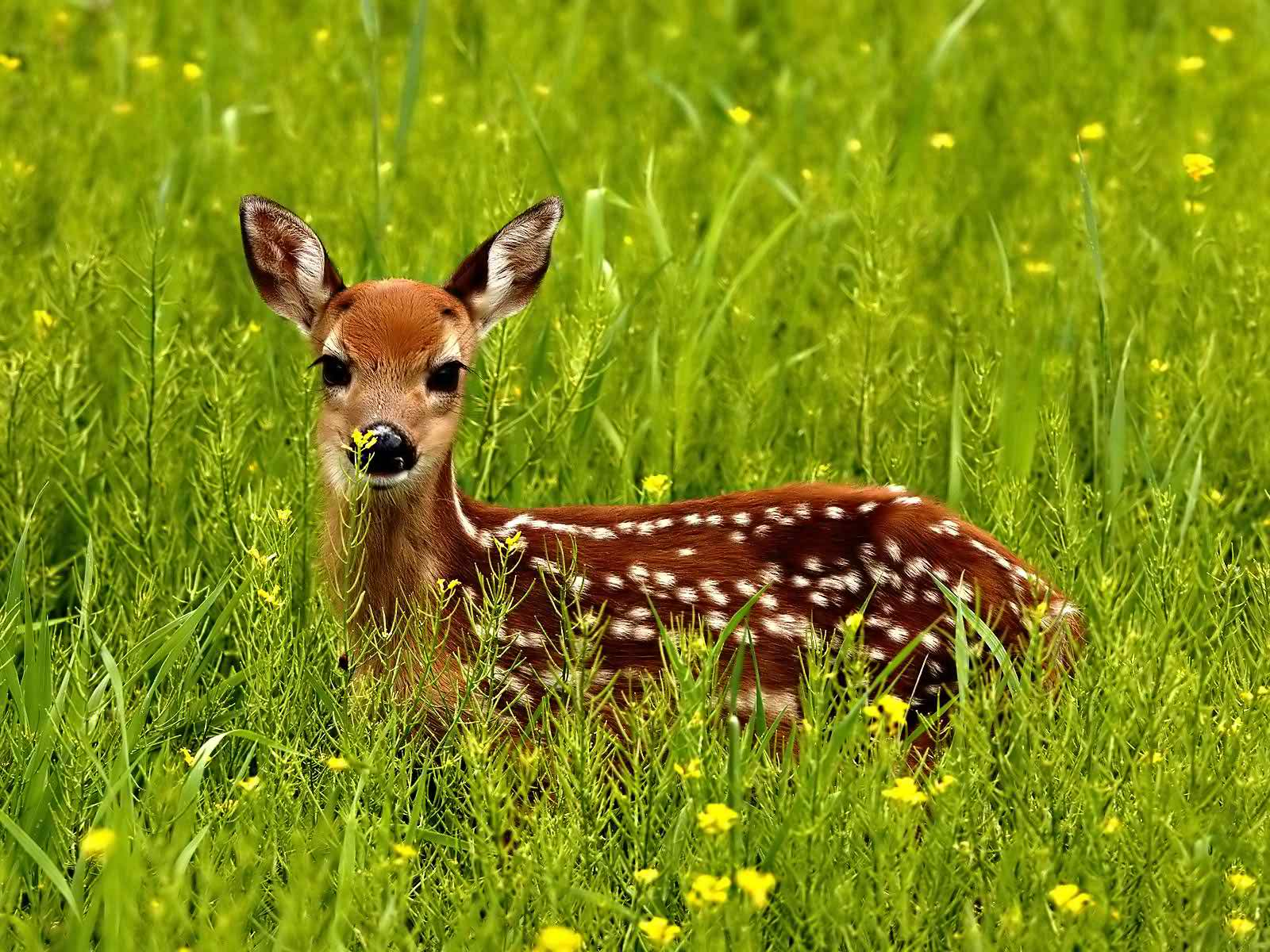 Baby animal wallpaper hd images – one hd wallpaper pictures.