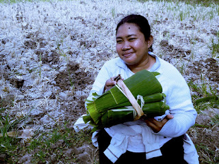 Just Got Banana Leaves In The Farm Field, Banjar Kuwum, Ringdikit Village, North Bali, Indonesia