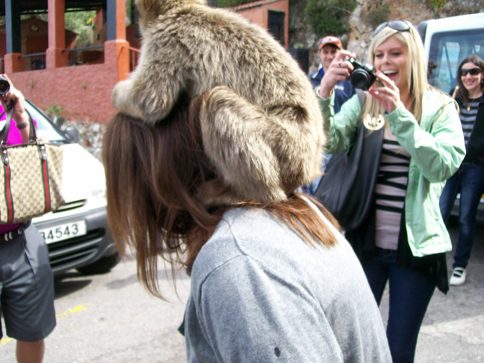Rockhounding Around: Dream Trip Spain: Barbary Macaque ...