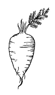 vegetable parsnip illustration image digital