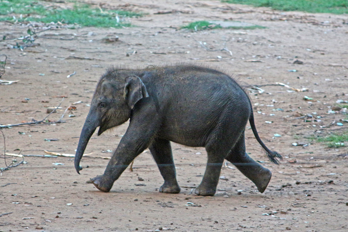 Babyelefant im Elephant Transit Home