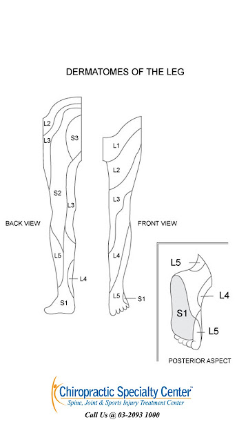 femoral ad sciatic nerve distribution shown