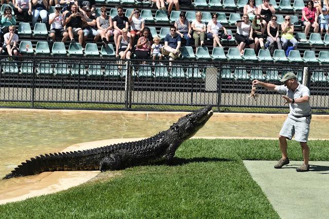 australia zoo crocodile