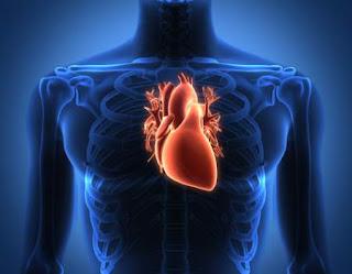 Cellule cardiache studiate tramite le rocce