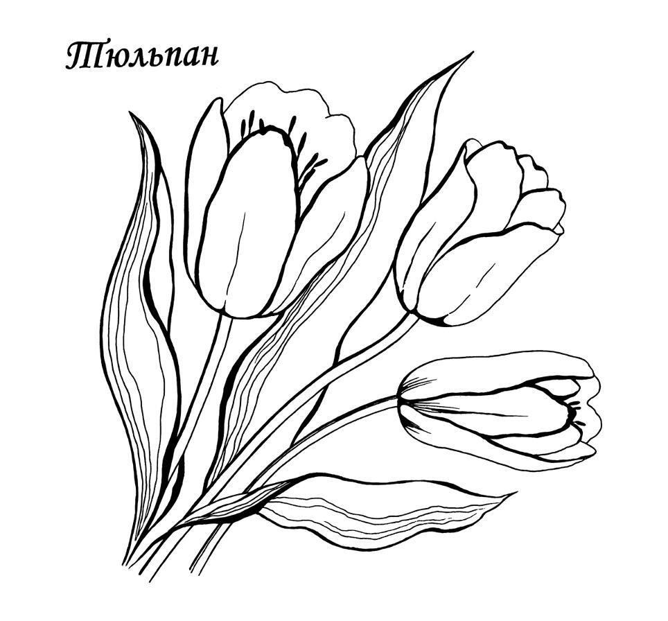 Раскраски деткам: Раскраска весенние цветы - Тюльпан