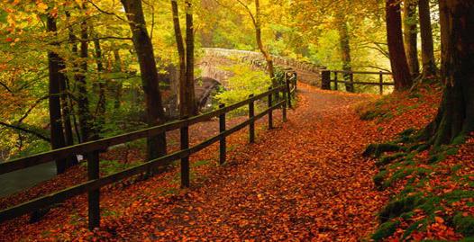 autumn-paint-colors.jpg