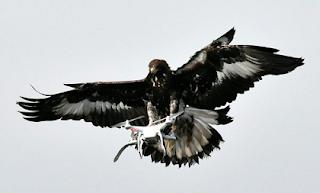Drone-Killing Eagle
