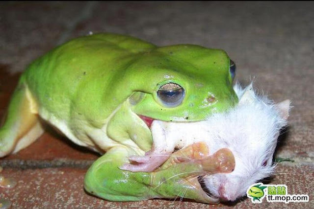 What Type Of Food Do Frogs Eat