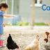 禽流感爆發,你該留意什麼?