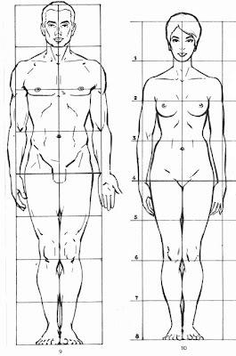 تقسيم الجسم